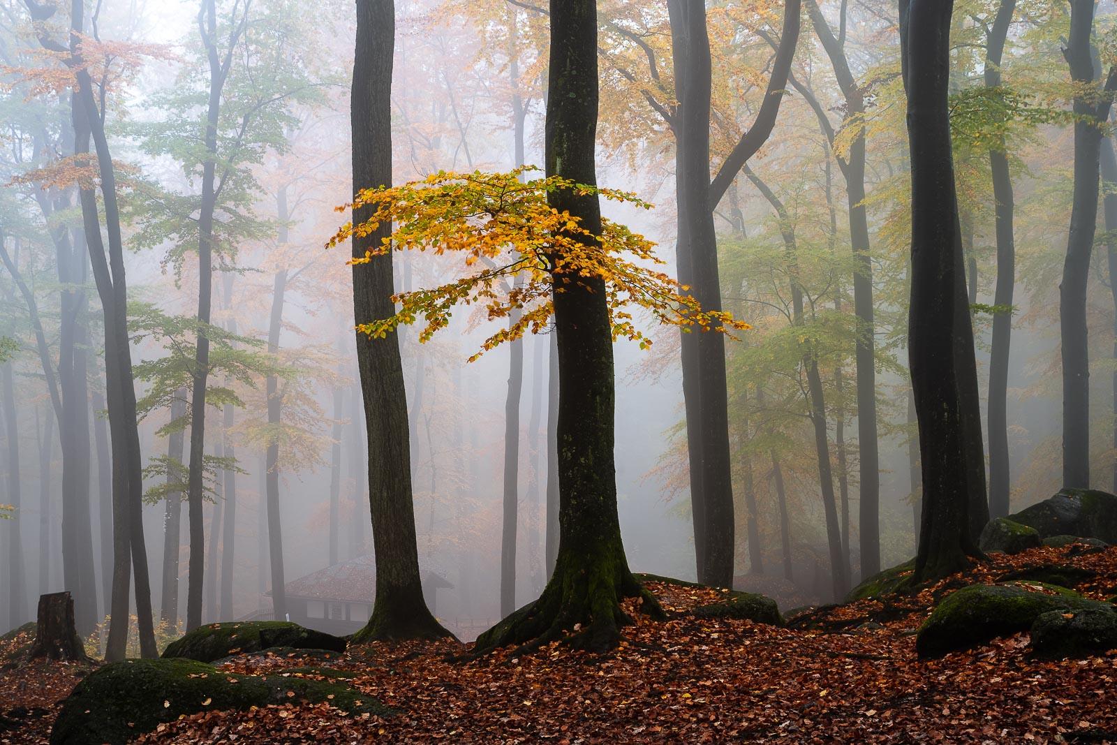 odenwald herbst