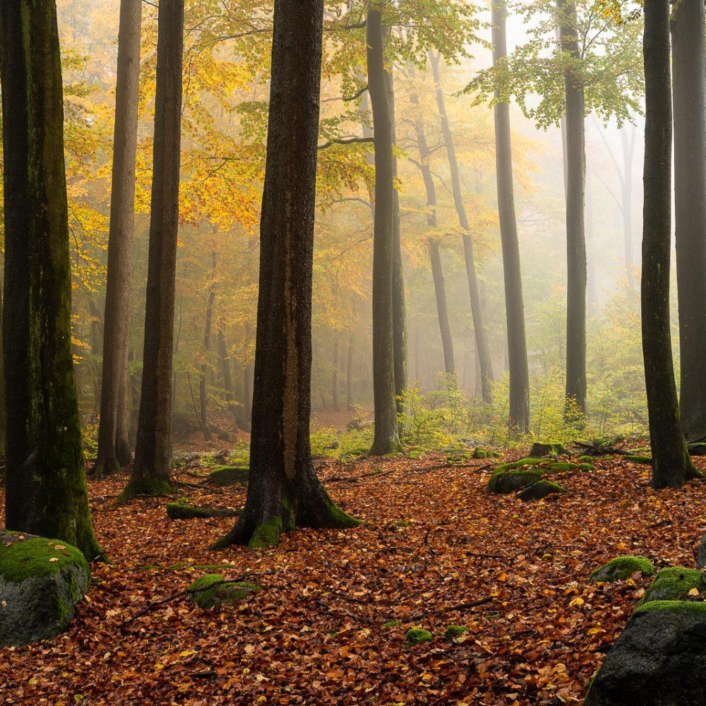 odenwald herbst nebel