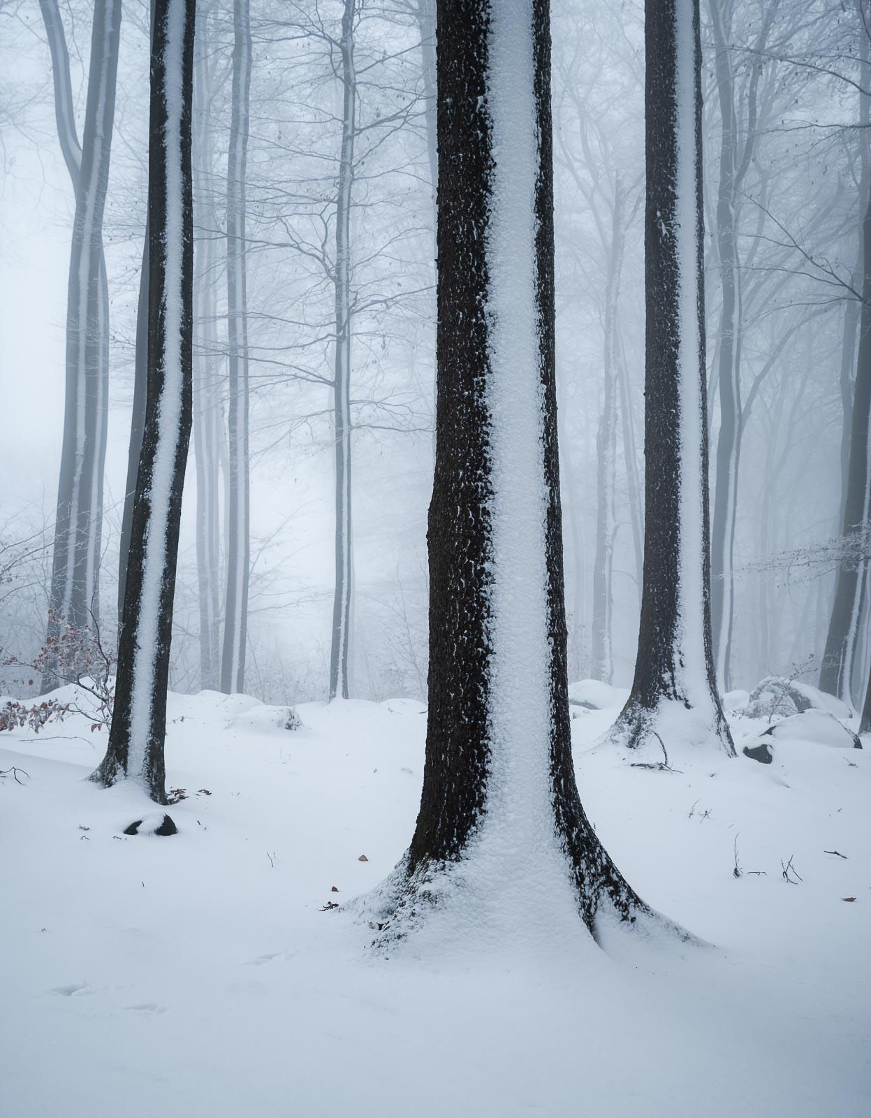 odenwald winter